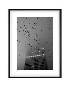 Monochrome Vögel über Stadt
