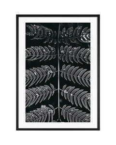 Monochrome Symmetrische Blätter
