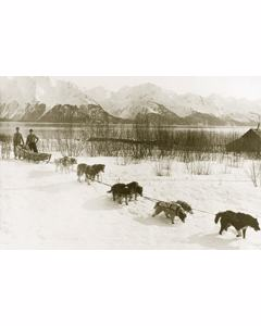 Vintage Picture Of Dogslead Team(alaska Maybe)
