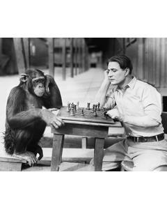 Schackspelande Apa