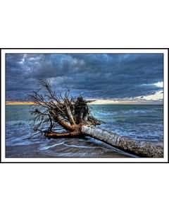 Träd Som Ramlat I Sjön