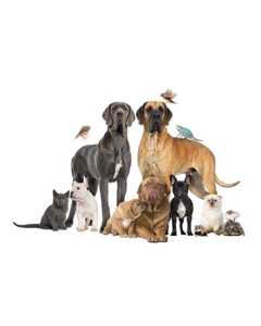 Dogs, Cats And Other Animals