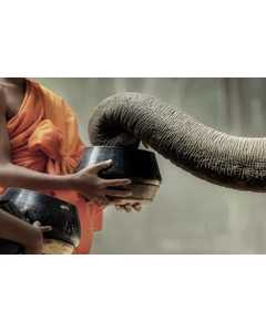 Elephant Eats Out Of A Bowl