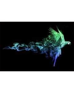 Blue/green Macaw