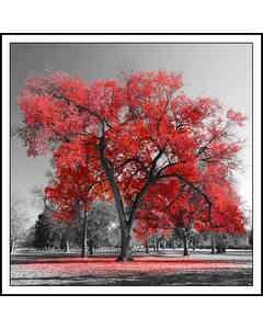 Svartvitt Träd Med Röda Löv