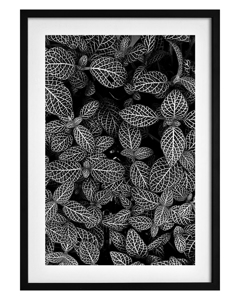 Poster Abstract Plant