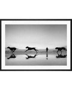 Monochrome Strandhunde