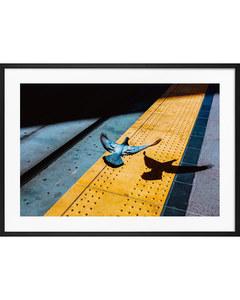 Poster Stadsfågel