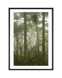 Der brasilianische Regenwald