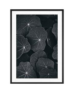 Monochrome Große Blätter