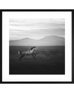 Poster Wild Paard