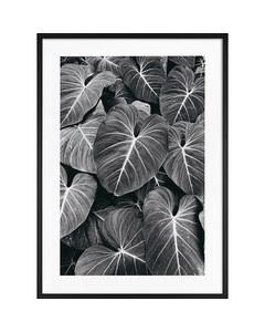 Monochrome Blätter im Regenwald