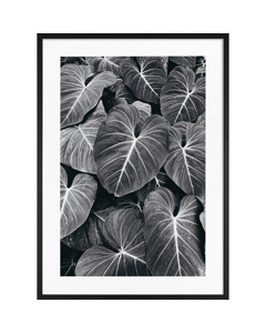 Poster Monokrom  Natur