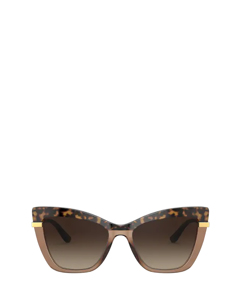 DG4374 havana on transparent brown Sonnenbrillen